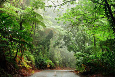 Daintree Rainforest QLD
