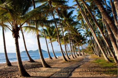 Palm Cove QLD